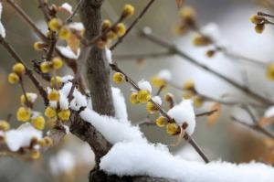 전국 곳곳 눈 쌓여…밤에 다시 산발적 눈발